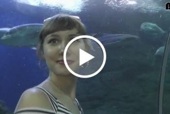 Öffentliche Video in UNTERWASSERWELT